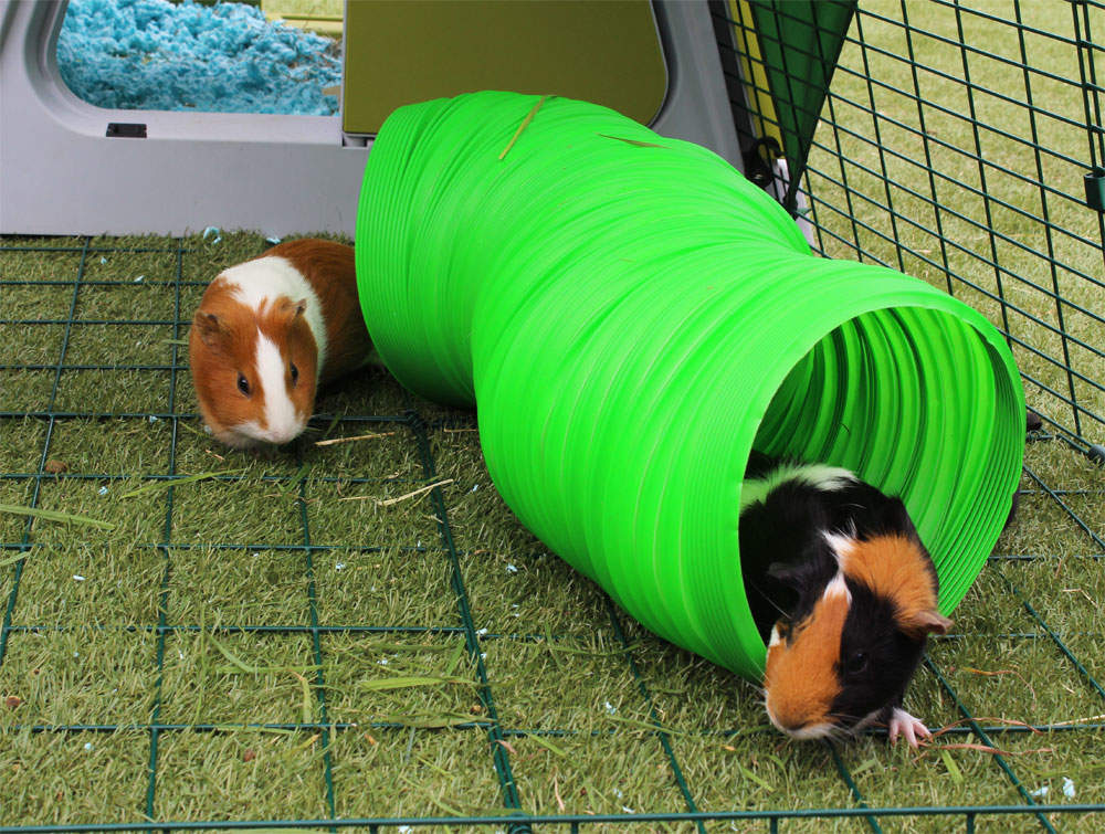 Guinea Pig Toys : Snugglesafe extending bunny and guinea pig warren rabbit