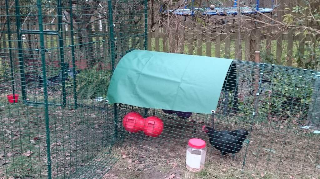 Heavy Duty Cover For Eglu Classic Extension Eglu Coop
