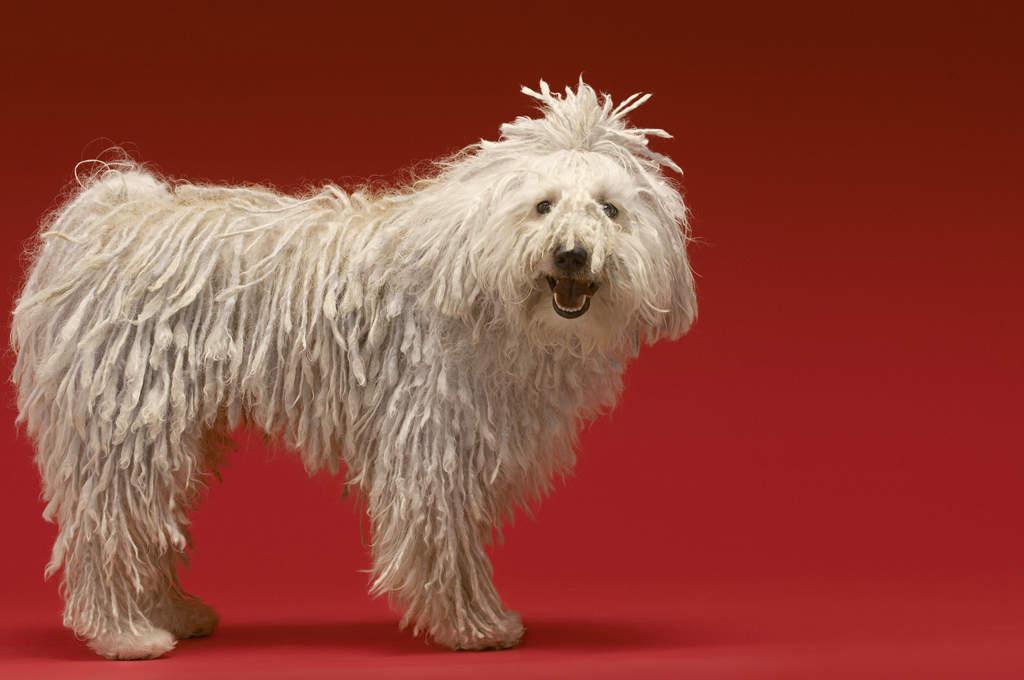 How To Make A Wool Puli Dog