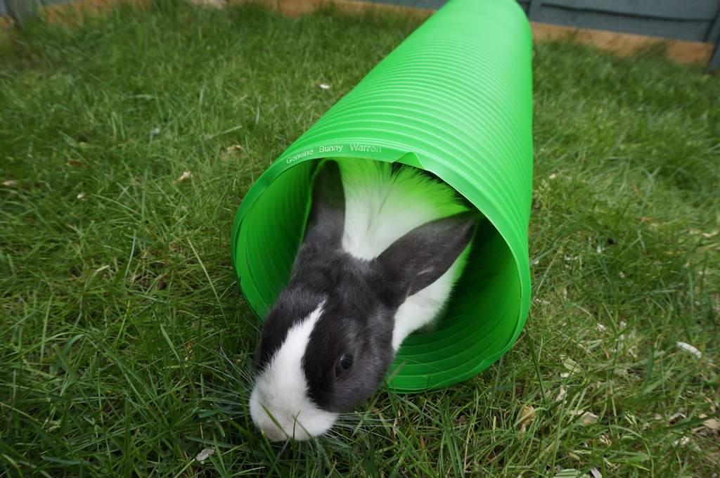Snugglesafe Extending Bunny And Guinea Pig Warren Rabbit