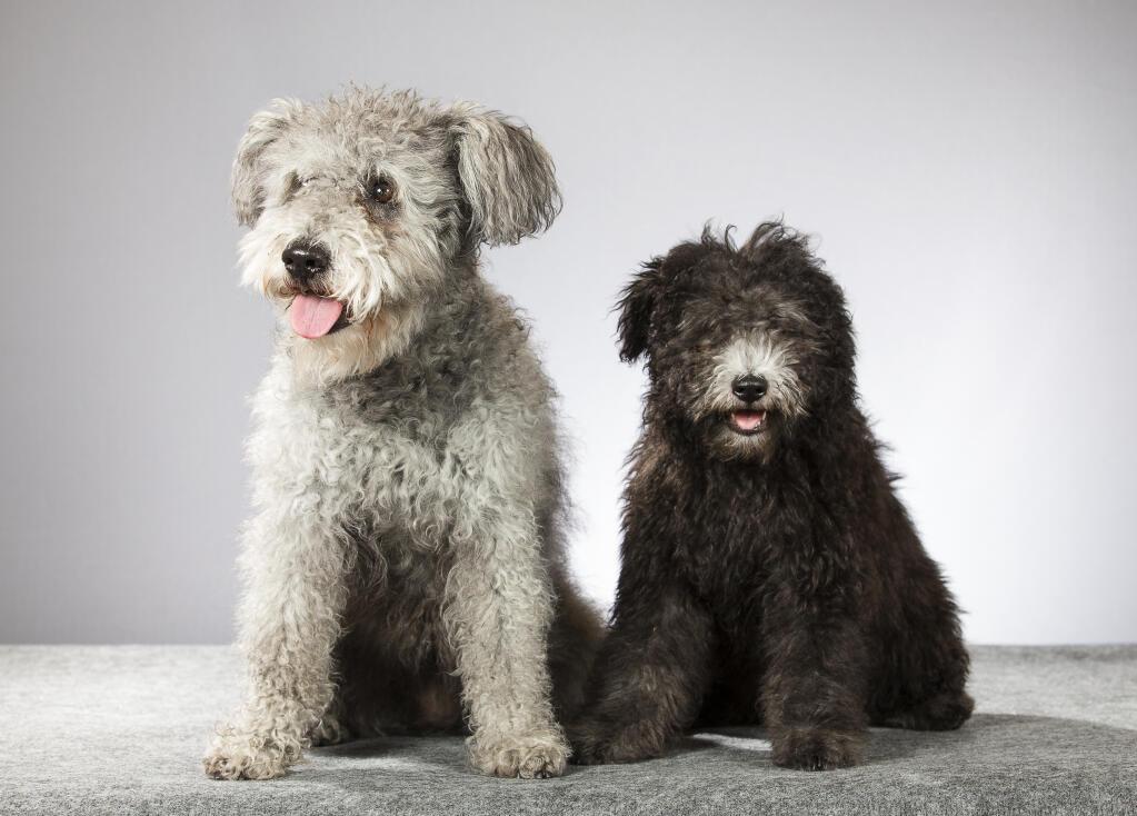 Hungarian Dog Breeds