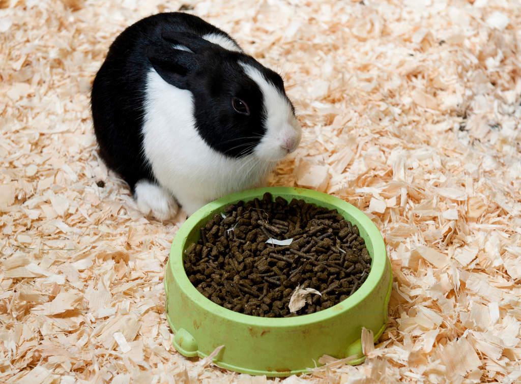 Giant Chinchilla Rabbit Dutch For Sale | Rabbi...