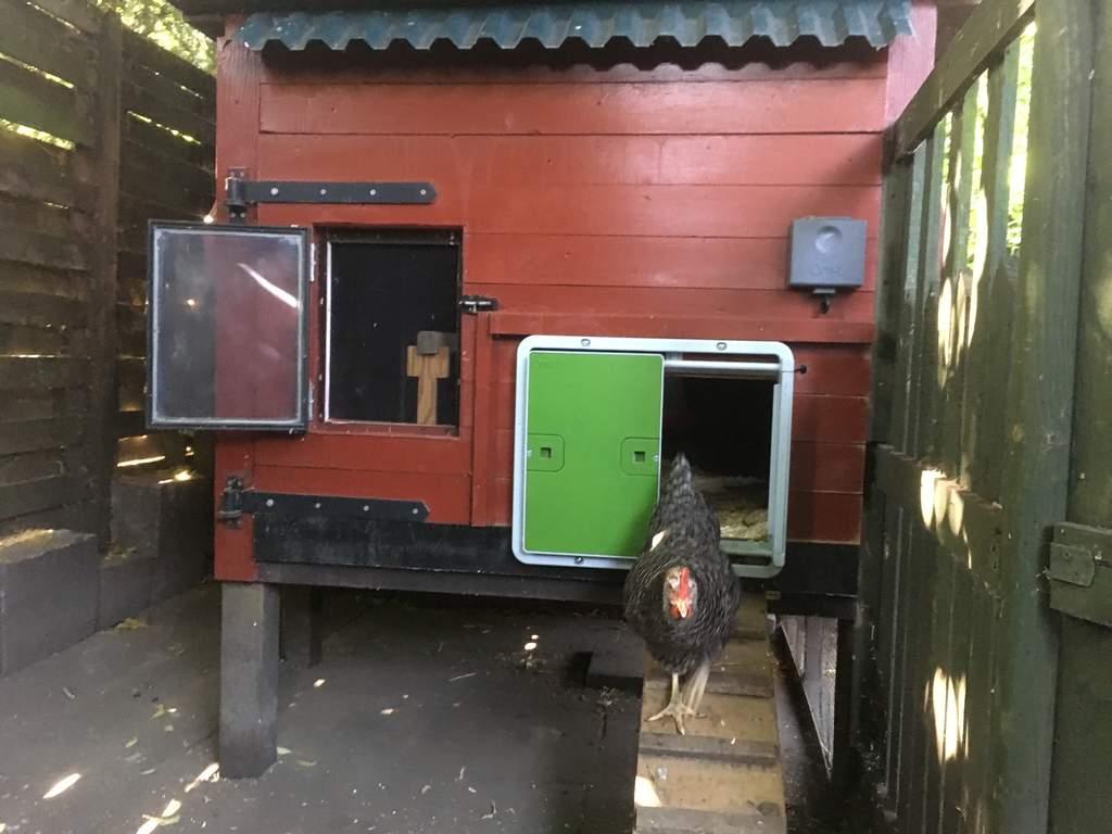 Automatic Chicken Coop Door Green Christmas Gift