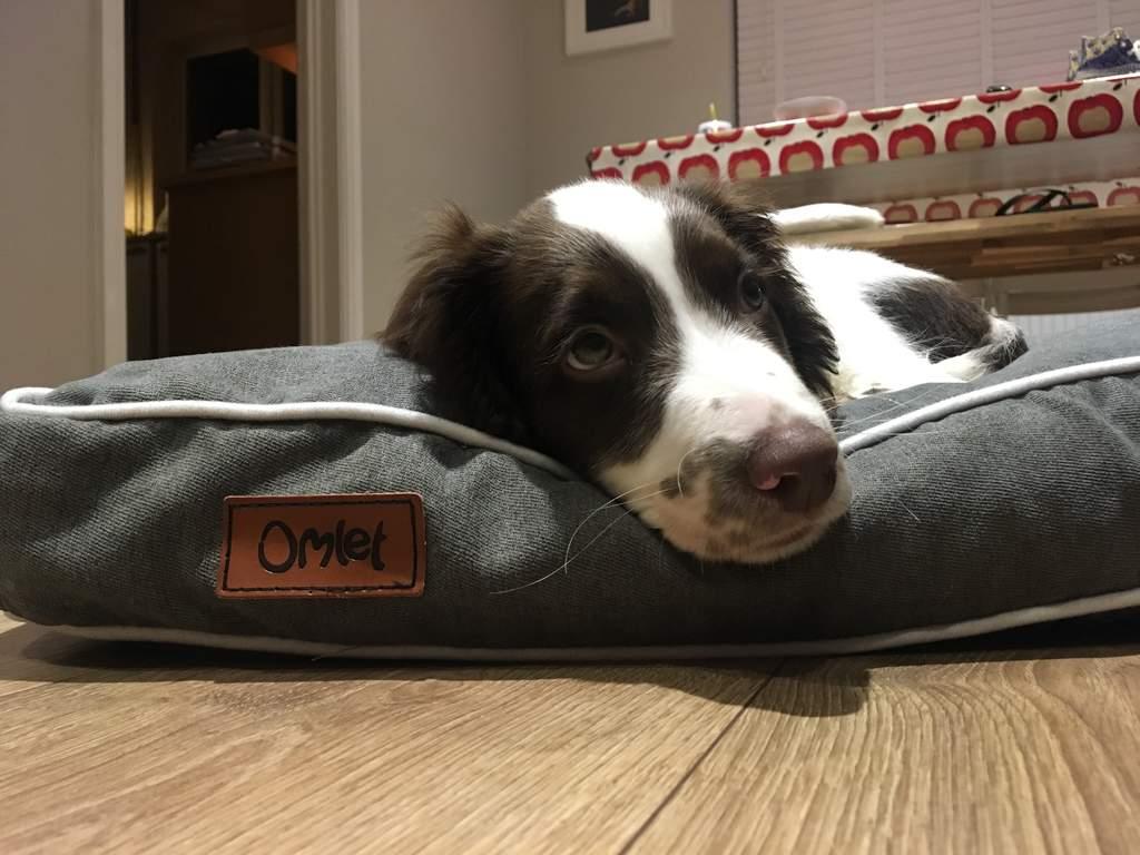 Fido Studio 24 Dog Bed Grey This Weeks Favourites Staff Picks