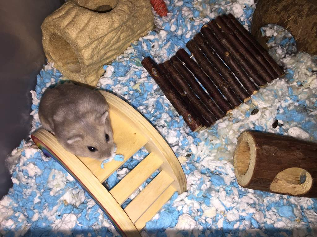 Carefresh animal bedding 10l blue hamster & gerbil bedding