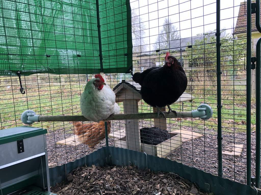 Omlet Chicken Perch 1 Meter Chicken Toys Accessories Chicken