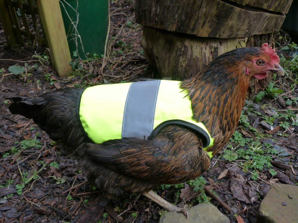 Yellow High Vis Chicken Jacket Chicken Clothing