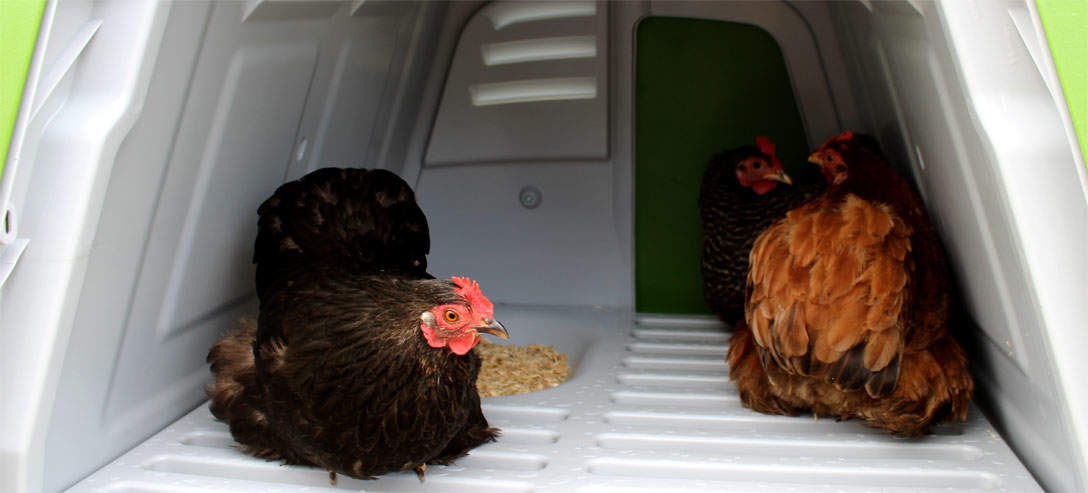 Chickens will love the integrated roosting bars and nesting box