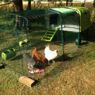 My hens Nugget, Poppy and Dolly are loving their new digs!