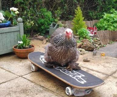 Pepper the cool, slick skateboard chick!