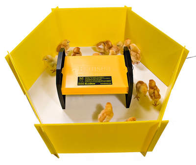 Chick Enclosure Panels Set of 8