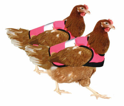 Pink High-Vis Chicken Jacket Twin Pack