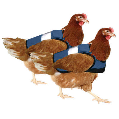 Blue High-Vis Chicken Jacket Twin Pack