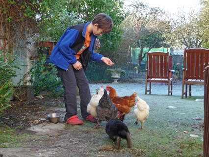 My son James feeding the chickens + rabbit