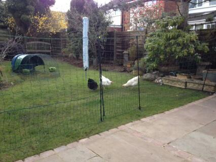 Our new fencing keeps our girls happy in the garden area