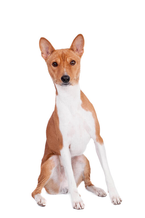 Types Of House Dogs With Pictures