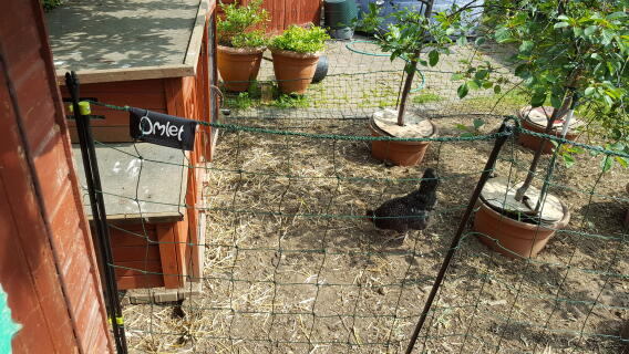 Omlet fence and mini-orchard