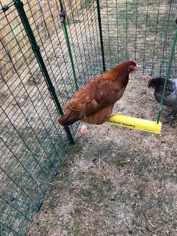263a06d8b6 The Chicken Swing