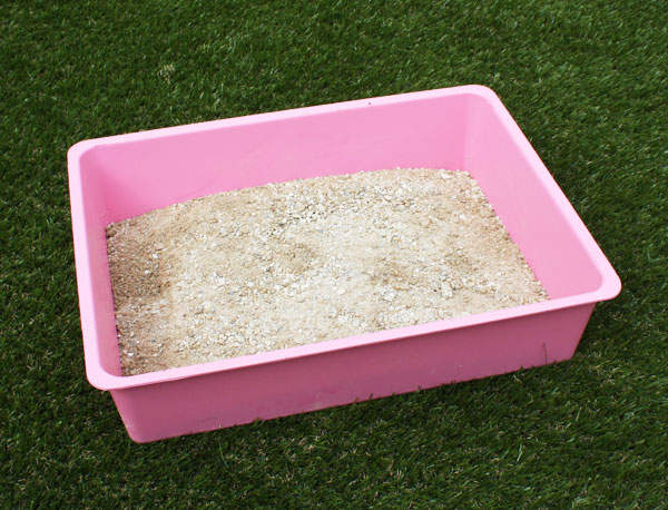 Fill The Dust Bath With A Mixture Of Dry Compost And Sand