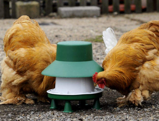 Blenheim Feeder with legs and rain hat