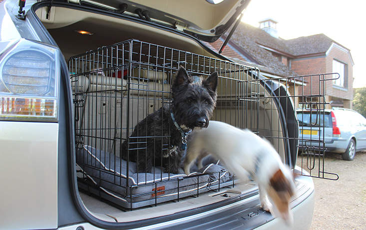 Fido Studio is a home from home for your dogs in the back of your car.