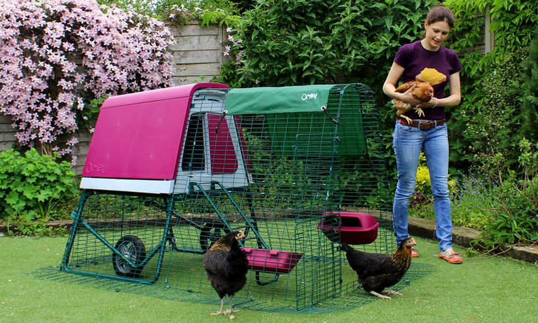 A door at the end of the Eglu Go UP run lets you free range your hens