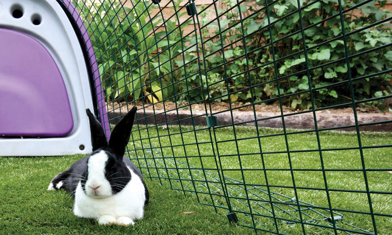 Rabbits love playing and lying in the spacious Eglu Classic Rabbit Hutch Run