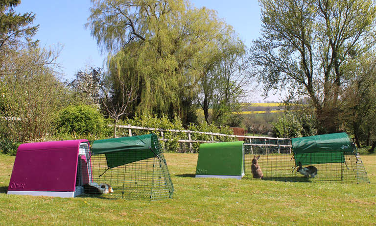 The Eglu Go Guinea Pig Hutch and Rabbit Hutch in the garden