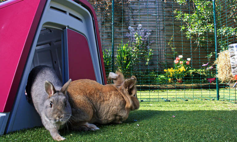 Placing a rabbit hutch in the Outdoor Rabbit Run will give your pet bunnies somewhere private to shelter