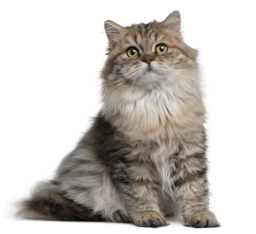 cat litter pregnant