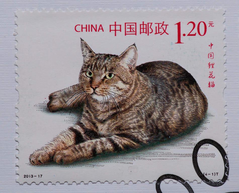 Dragon Li Cats Breed Information Omlet