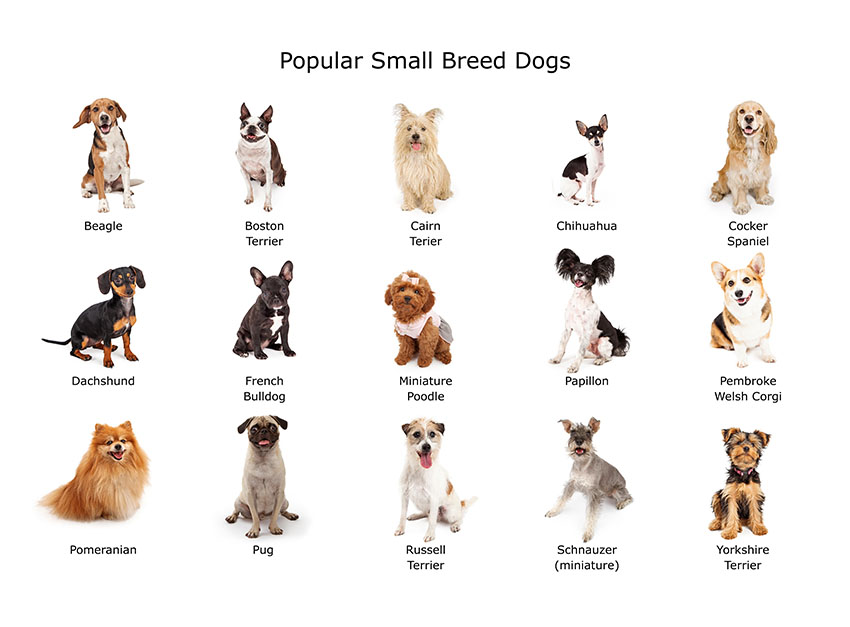 Images of different types of small dogs