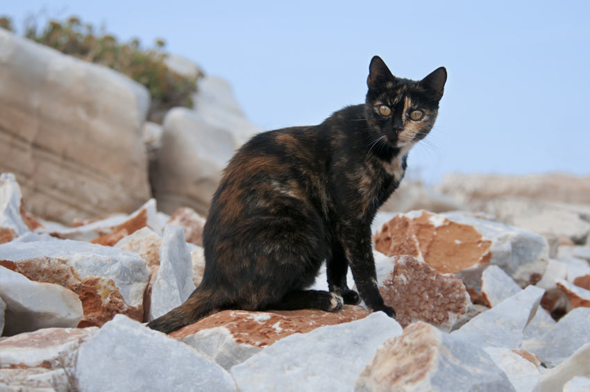 Cat Coat Colours And Patterns | Choosing The Right Cat For ...
