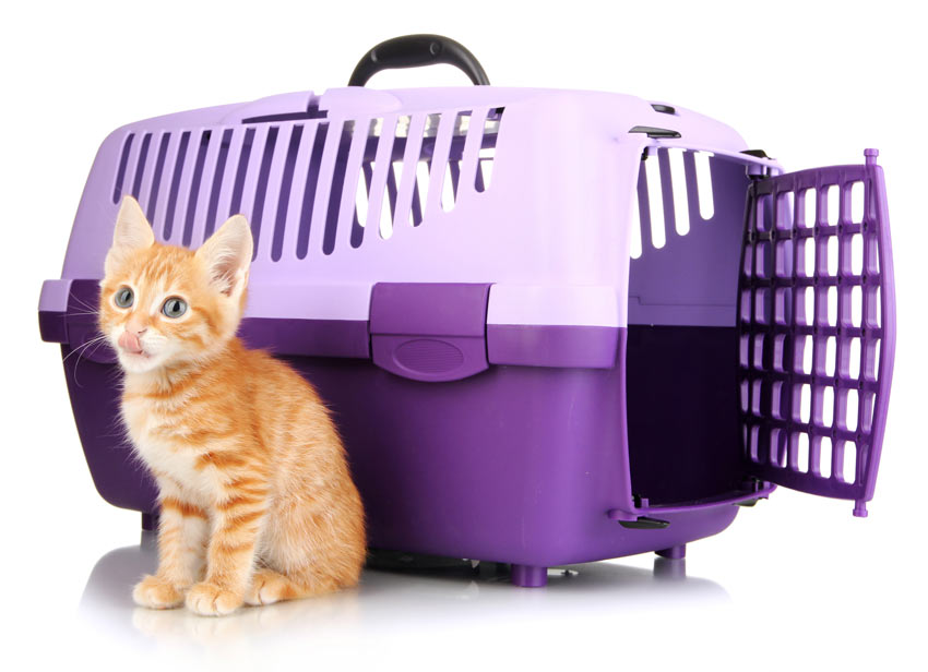 Comfortable Cat Travel Box