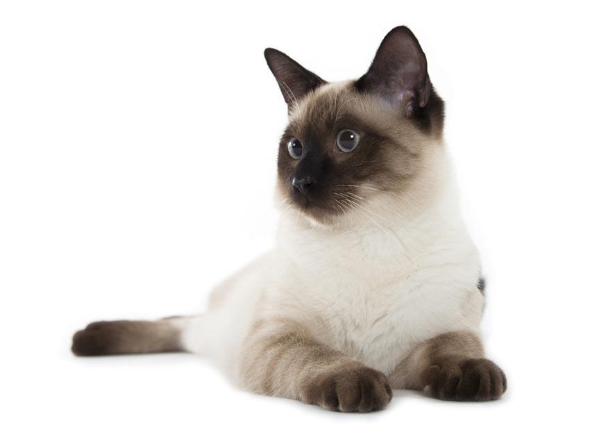 ist eine katze das richtige f r mich sollte ich mir eine katze zulegen katzen handbuch. Black Bedroom Furniture Sets. Home Design Ideas