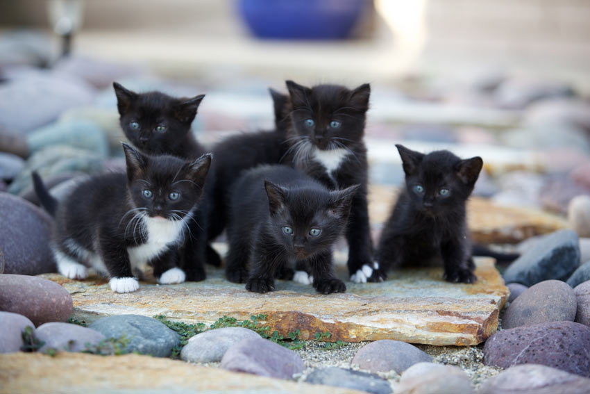 Choosing a kitten from a litter choosing the right cat for Can you train a cat to go outside for bathroom