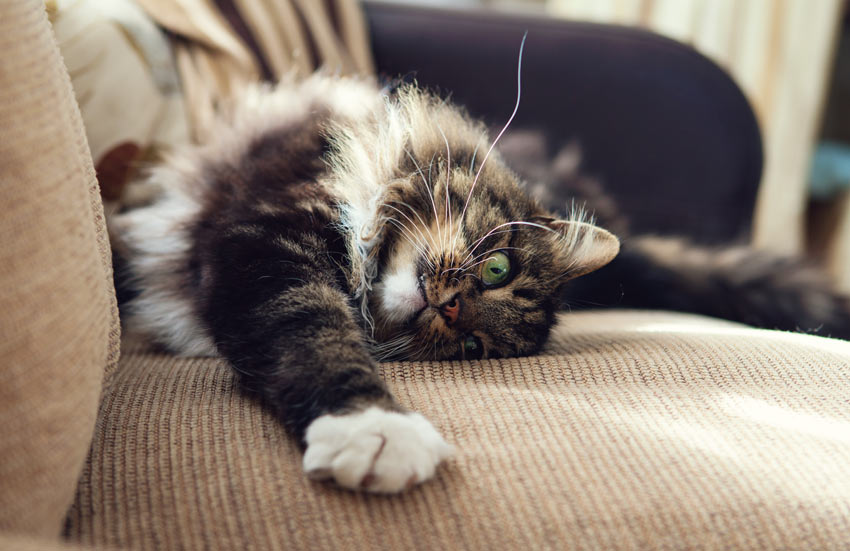 How To Make Cats Feel Relaxed