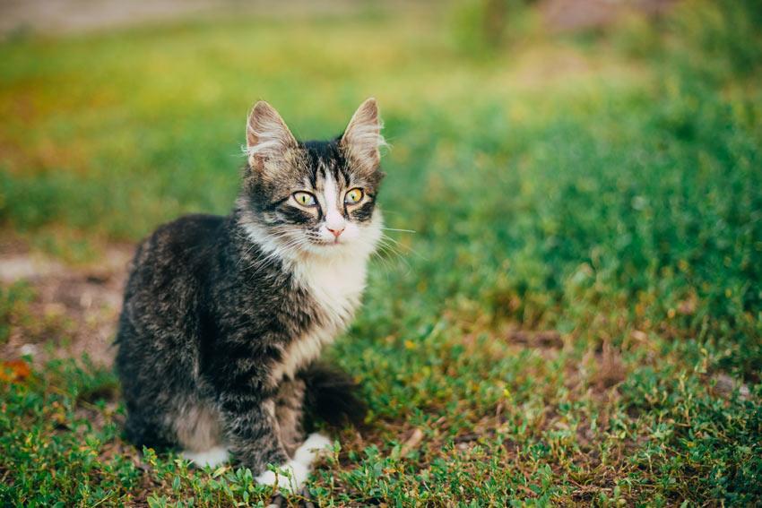 kitten philadelphia