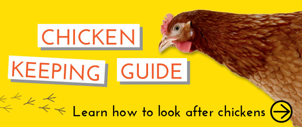 Chicken Keeping Guide