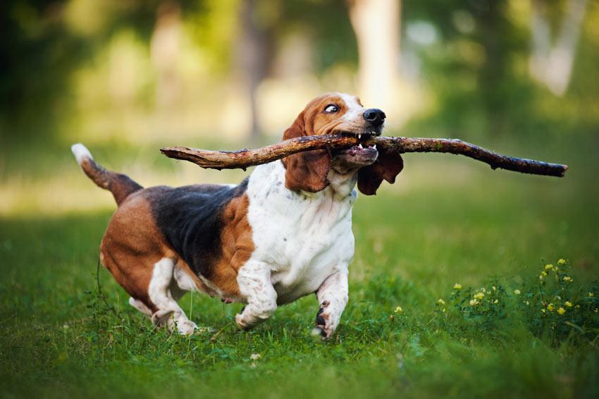Fetch Training Dog