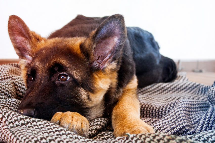 Collecting Your Dog From The Vets | General Dog Health