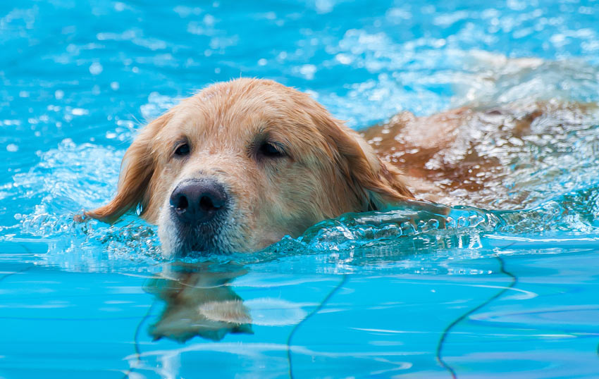 Teaching Your Dog To Swim Training Your Dog Dogs