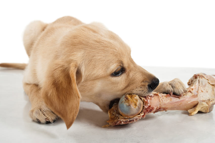 Where To Get Raw Dog Bones
