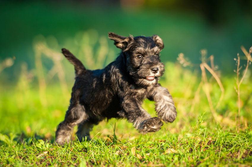 Hypoallergenic Dog Rescue Uk