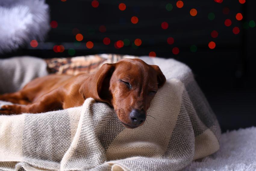 dog-to-sleep