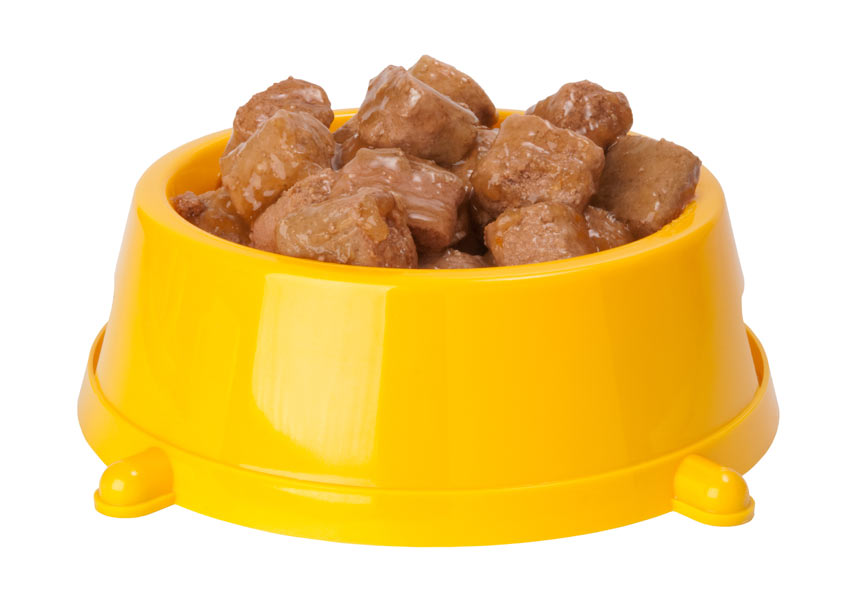 Dog Eating Dry Food Problems