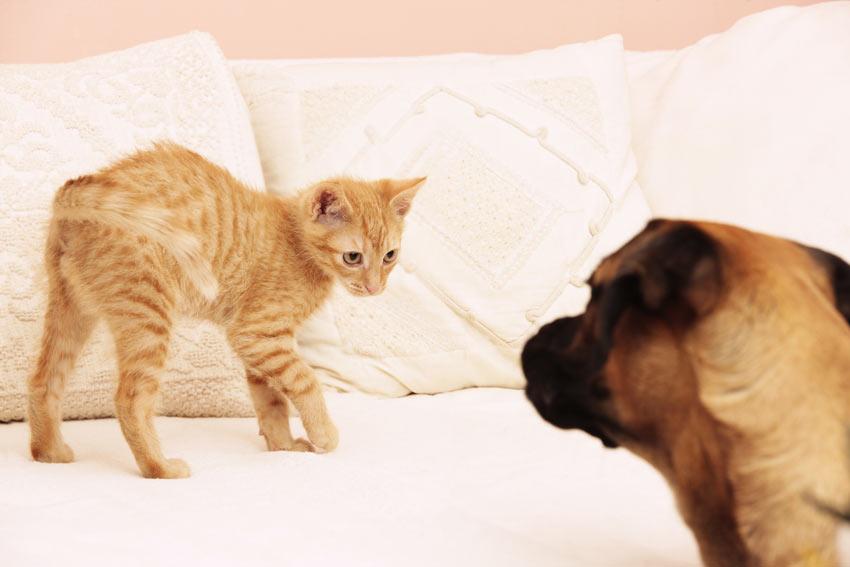 cat's cradle tricks videos