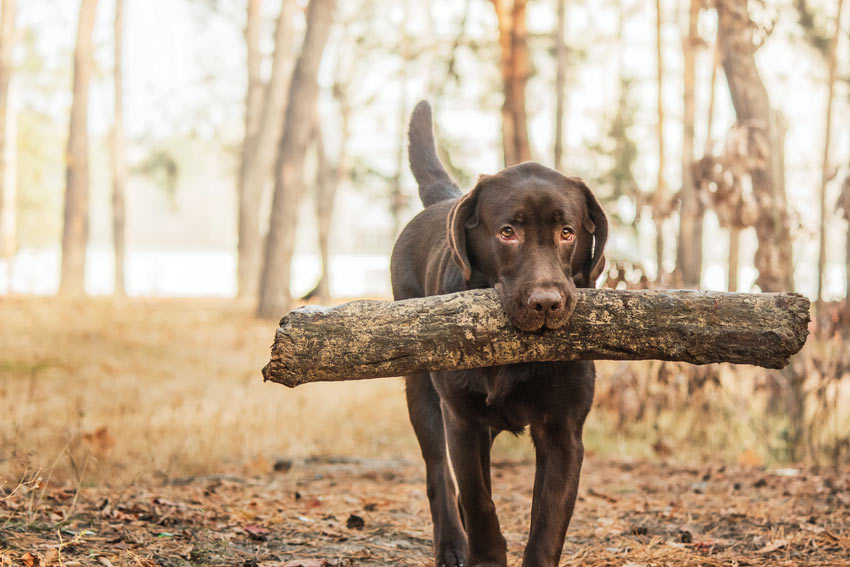 7 Best Dog Breeds With Children Choosing The Right Dog