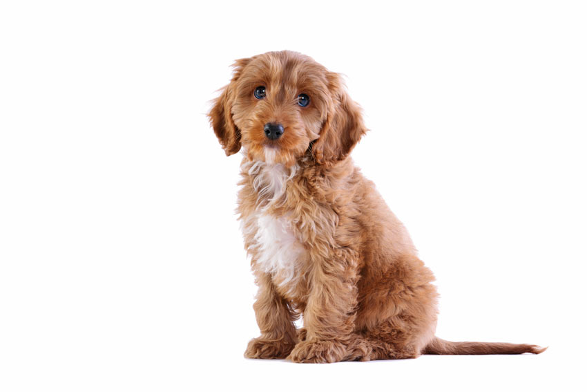 Daily Care Of A Dog Dogs Guide Omlet Uk