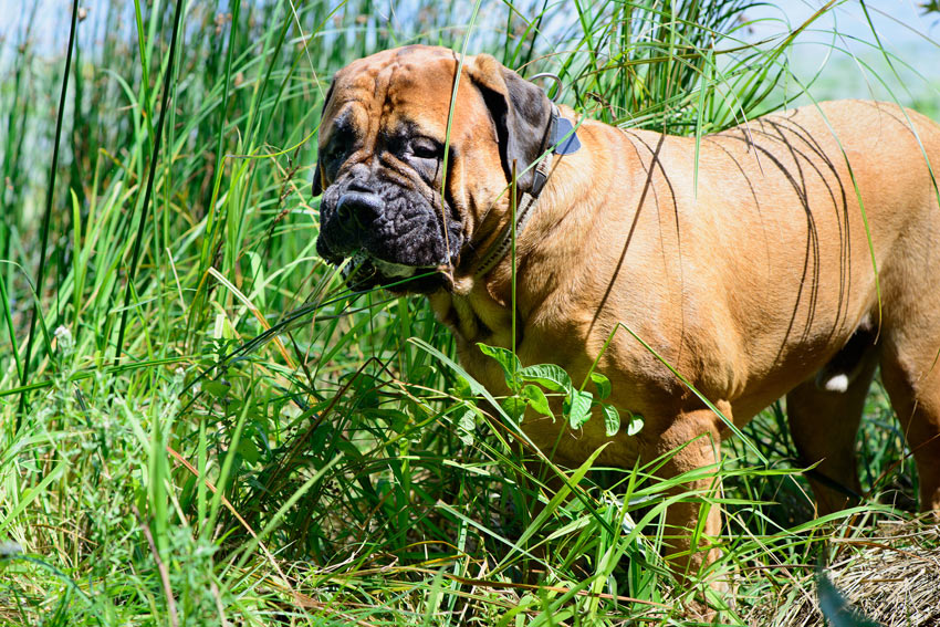 What To Do If Your Dog Eats Grass